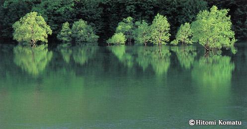今月の一枚・2004年5月「水中木(秋田県田沢湖町)」