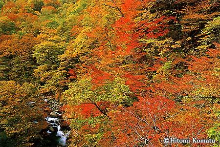 今月の一枚・2004年9月「錦繍の竜川」(岩手県・雫石町)