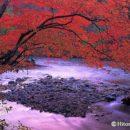紅葉と流れ(青森県・奥入瀬)