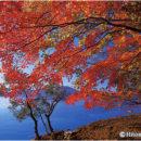 錦繍の田沢湖(秋田県・田沢湖)