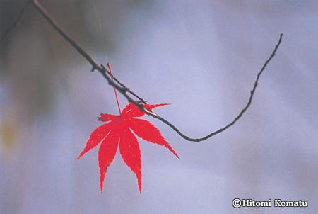 今月の一枚・2005年11月「行く秋」(秋田県・仙北市角館)