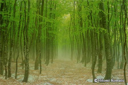 今月の一枚・2006年5月「ブナの森」