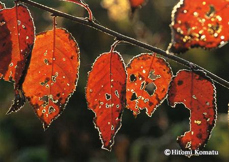 今月の一枚・2006年10月「秋の光」
