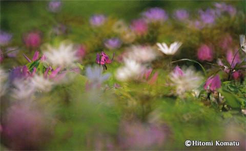 今月の一枚・2007年4月「春色」