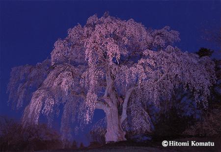 今月の一枚・2008年4月「妖艶 かもん桜」(福島県・三春町)