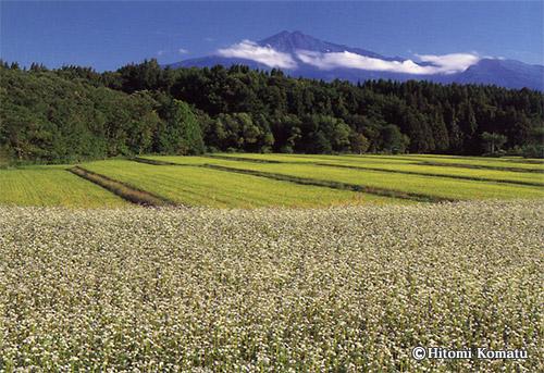 今月の一枚・2008年8月「そばの花咲く鳥海山」(秋田・にかほ市)