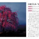 「桜逢瀬」写真展終了致しました。