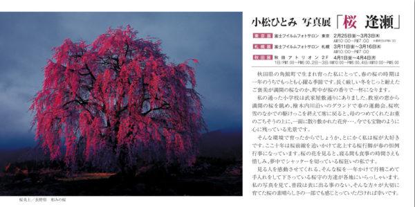 桜逢瀬写真展