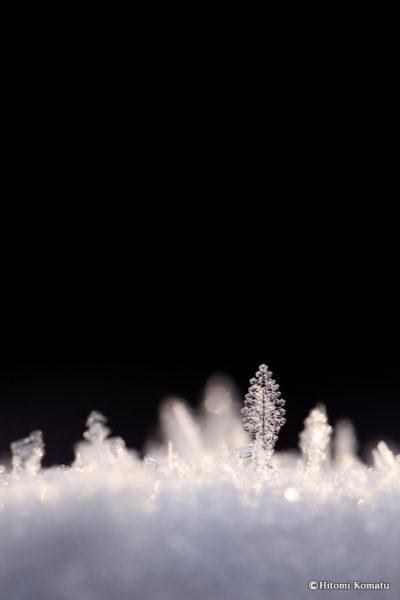 今月の一枚・2012年3月「冬の忘れ物」