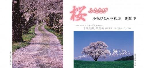 「桜ふたたび」 小松ひとみ写真展(終了)