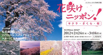 写真集「サクラ・さくら・桜」そして、写真展「花咲けニッポン! サクラ・さくら・桜」のご案内