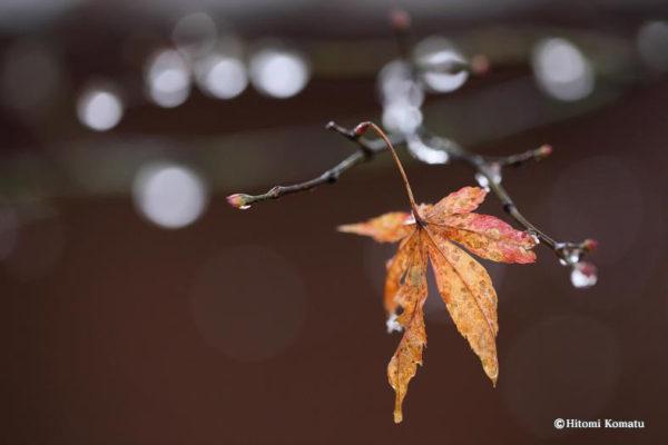 今月の一枚・11月「冬隣り-II」