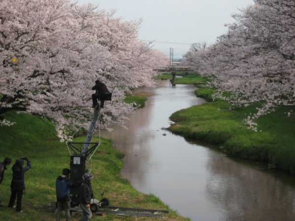 島根県玉造温泉の桜撮影
