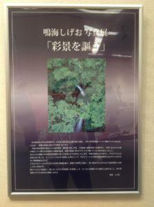 鳴海しげおさん写真展「彩景を謳う」ぷかぷ館