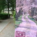 5/31 最終日は在廊予定です「桜逢瀬」「みちのく色語り」