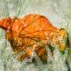 耕作放棄地で見つけた落葉・・