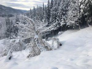 スノーシュウで気持ちのいい森散歩