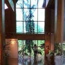 等身大「400年ブナ」世界遺産センターに展示